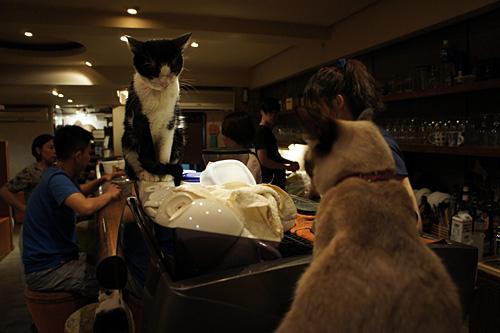 有貓的咖啡店